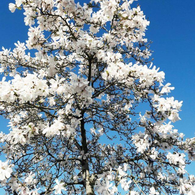 I feel it its comingspring printemps Nantes FilipinainFrance